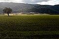 Capay Valley.jpg