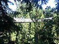 Capilano Suspension Bridge in Summer.jpg