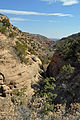 Caprock Canyons 2014 8.JPG