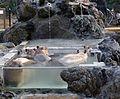 Capybaras in Saitama Children's Zoo.JPG