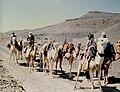 Caravane de Méharis dans le Hoggar.jpg