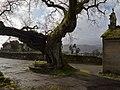 Carballo de Santa Margarida, Mourente, Pontevedra.jpg