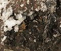 Cassiterite-Teallite-Wurtzite-pas-06c.jpg
