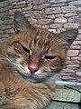 Cat2go.jpg