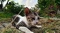 Cat 21.jpg