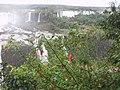 Cataratas do Iguaçu - flores.jpg