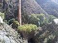 Catorce, San Luis Potosi, Mexico - panoramio (6).jpg