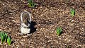Central Park - Content Squirrel (New York) (30301398977).jpg