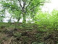 Cetatea Blidaru (16).JPG