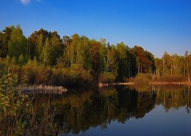 Chelyabinsk forest pool 2010.jpg
