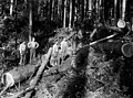 Chokesetters and logs on hillside, unidentified logging company, ca 1913 (PICKETT 169).jpeg