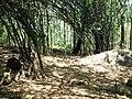 Chulannur Peafowl Sanctuary - panoramio (2).jpg