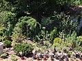 City garden Niš.IMG 3707.jpg