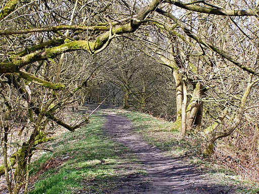 Clifton Country Park - Fletcher's Canal Towpath - geograph.org.uk - 1775060