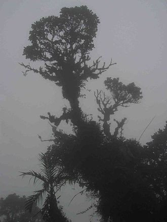 La Amistad International Park - Image: Cloud forest panama 1