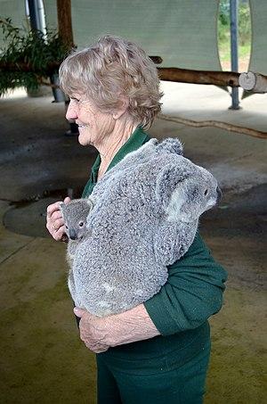 Theria - Image: Cohunu koala, 2013(6)