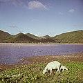 Collectie Nationaal Museum van Wereldculturen TM-20017517 Zoutpannen 'Salt Pond' achter Philipsburg Sint Maarten Boy Lawson (Fotograaf).jpg