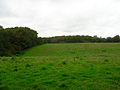 Coneyburrow Wood - geograph.org.uk - 267595.jpg