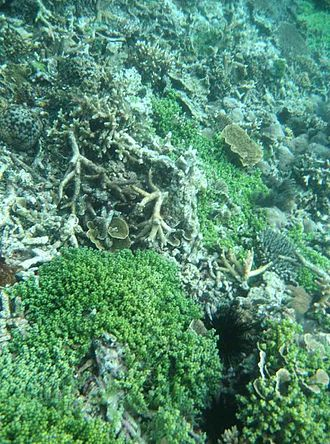 Thousand Islands (Indonesia) - Coral reefs in Kepulauan Seribu