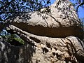 Corsica - Roccapina - strange rock - panoramio.jpg