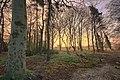 Cottingham, Castle Rd - panoramio.jpg