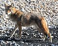 Coyote Union Station.jpg