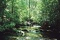 Crabtree Falls Upper Stream.jpg