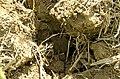 Crops NR 37 (38808783752).jpg