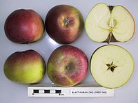 Cross section of Blaxtayman, National Fruit Collection (acc. 1950-140).jpg