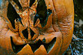 Cucurbita pepo Halloween carved pumpkin a few days after, decay.jpg