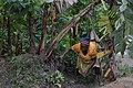 Cultivatrice camerounaise3.jpg