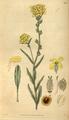 Curtis's Botanical Magazine, Plate 3087 (Volume 58, 1831).png