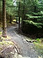 Cycle Trail in Kirroughtree Forest - geograph.org.uk - 431778.jpg
