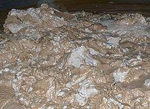 Una miscela di farina fossile e lievito dopo la filtrazione.