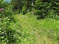 Dactylorhiza fuchsii 35.jpg