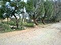 Dallan , Khyber Pakhtunkhwa , Pakistan - panoramio (4).jpg