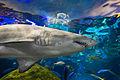 Dangerous Lagoon - Sharks-9.jpg