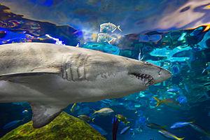 Ripley's Aquarium of Canada - Image: Dangerous Lagoon Sharks 9