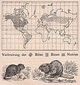 Das Kürschner-Handwerk, II. Auflage 3. Teil, S. 57, Weltkarte Verbreitung der Biber, Bisam und Nutria (1910).jpg