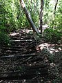 Decaying wooden walkway - panoramio.jpg