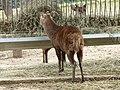 Deer (2380419176).jpg