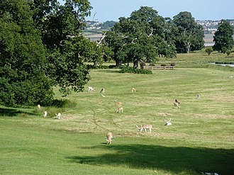 Deer park (England) - Fallow deer in the park of Powderham Castle, Devon