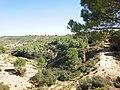 Desembocadura de la gran zanja del pinar de la Vía - panoramio.jpg