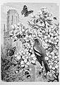 Die Gartenlaube (1880) b 257.jpg