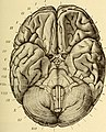 Diseases of the nervous system (1910) (14772635542).jpg
