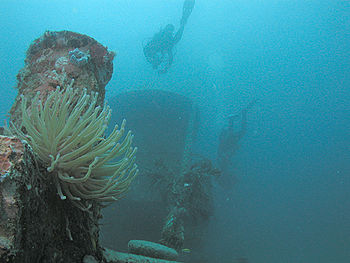 Divers and anemone on the MV River Taw wreck, St. Kitts.jpg