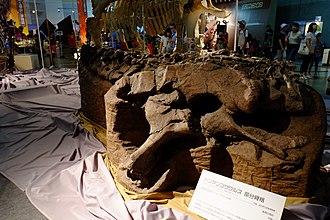 Dongyangosaurus - Holotype