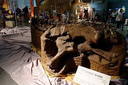 Dongyangosaurus