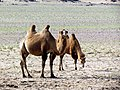 Dornogovi Province - Mongolia (6248524878).jpg