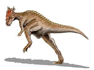 Dracorex - Restoration.